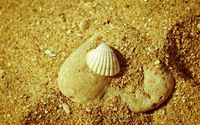 Seashell on sand wallpaper 1920x1200 jpg