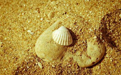 Seashell on sand wallpaper
