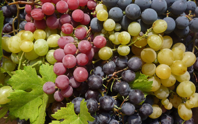 Shades of grapes wallpaper