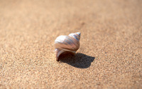 Shell [5] wallpaper 1920x1200 jpg