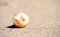 Shell in the sand wallpaper 2560x1600 jpg