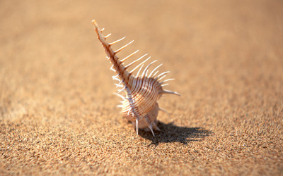 Shell on sand wallpaper
