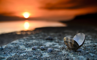 Shell on the beach wallpaper