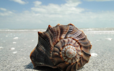 Shell on the beach close-up wallpaper