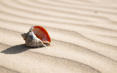 Shell on the sand wallpaper