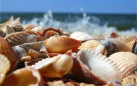 Shells [2] wallpaper 1920x1200 jpg
