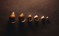 Shells wallpaper 1920x1200 jpg