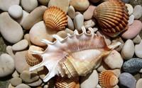 Shells and stones wallpaper 1920x1200 jpg