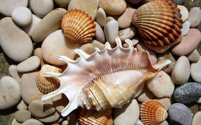 Shells and stones wallpaper