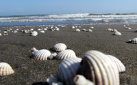 Shells in the sand wallpaper 1920x1080 jpg