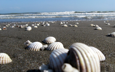 Shells in the sand wallpaper