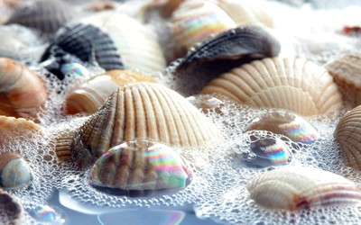 Shells in the water wallpaper