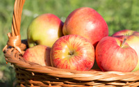 Shiny apples in a basket wallpaper 3840x2160 jpg