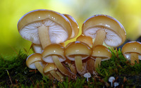 Shiny mushrooms wallpaper 3840x2160 jpg