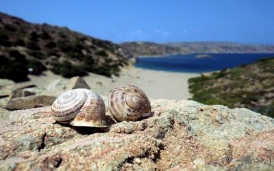 Snail shells on the beach wallpaper