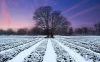 Snow layers wallpaper 1920x1080 jpg