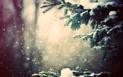 Snow on fir tree wallpaper