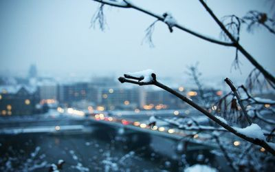 Snowy branch with the city in the background Wallpaper