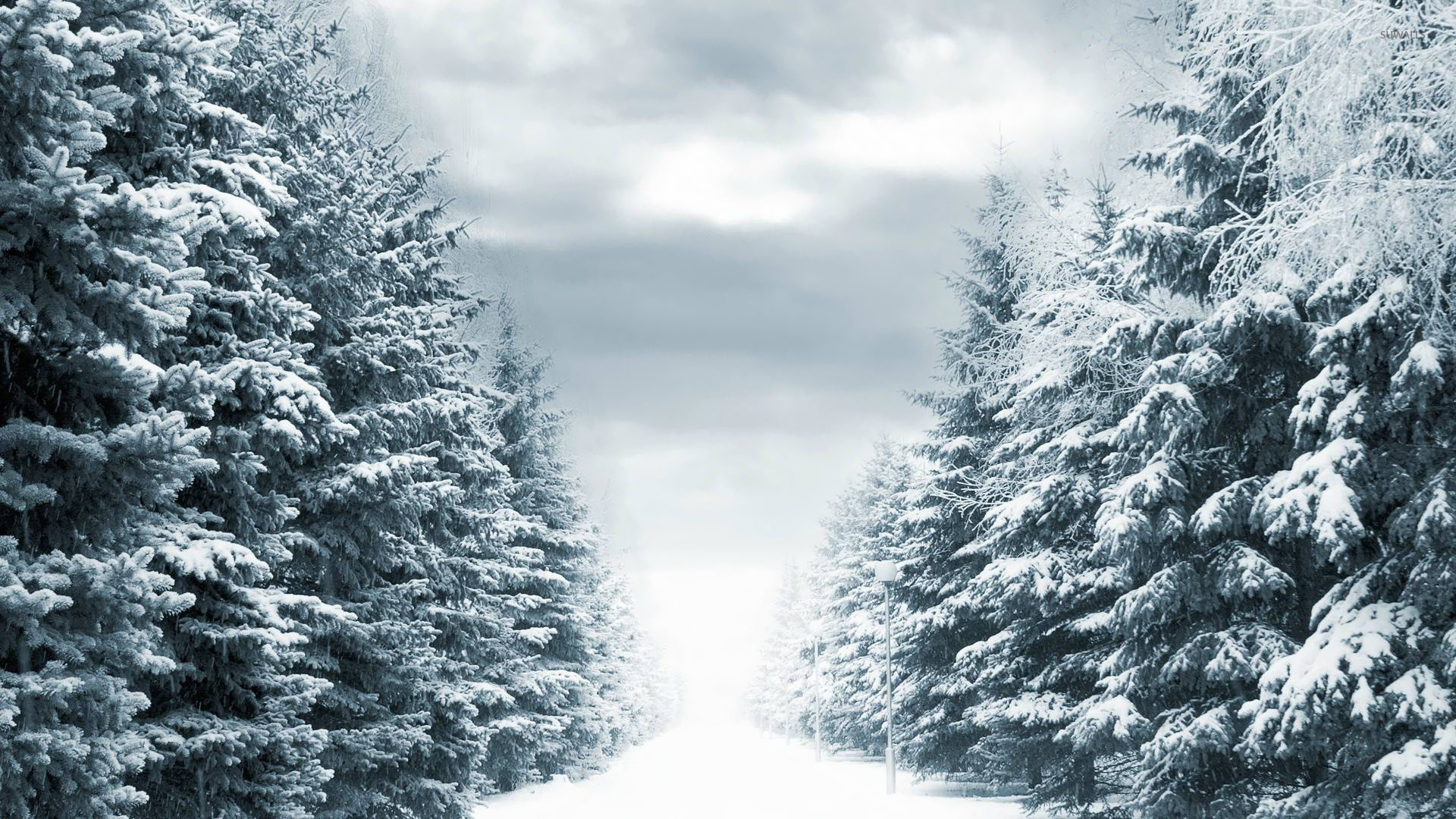 snow path wallpapers - photo #27