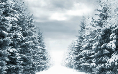 Snowy Park Path wallpaper