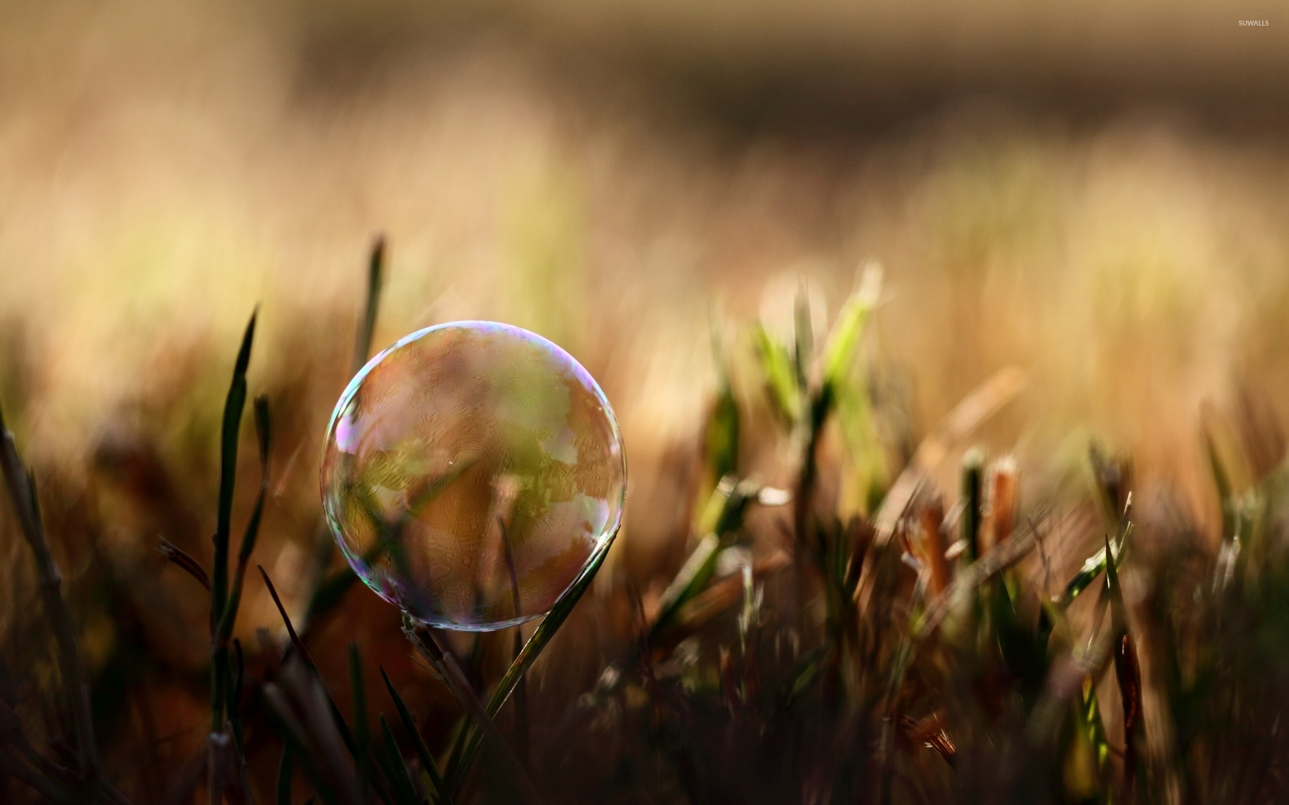 Soap Bubble On The Grass Wallpaper Photography Wallpapers