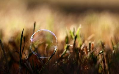 Soap bubble on the grass wallpaper