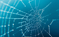 Spider web wallpaper 2560x1600 jpg