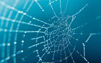 Spider web wallpaper 2560x1600 jpg