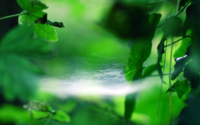 Spider web among the leaves wallpaper