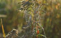 Spider web on a plant wallpaper 1920x1200 jpg