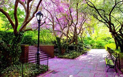 Spring park Wallpaper