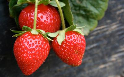 Strawberries [6] wallpaper