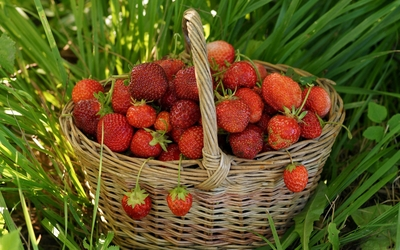 Strawberries in a straw basket wallpaper