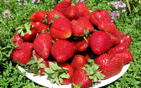 Strawberries on a white plate wallpaper 1920x1200 jpg