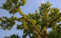 Sun light over the tree wallpaper 1920x1200 jpg