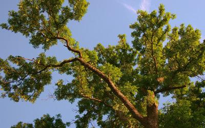 Sun light over the tree wallpaper