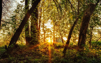 Sun rays in the forest wallpaper 1920x1200 jpg