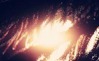 Sunlit fir branches wallpaper 2560x1600 jpg