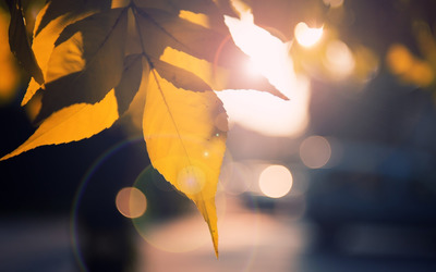 Sunlit leaves wallpaper