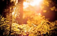Sunshine in the forest wallpaper 1920x1200 jpg
