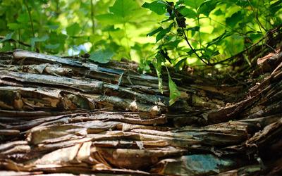 Tree bark [3] wallpaper