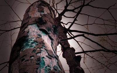 Tree bark [5] wallpaper