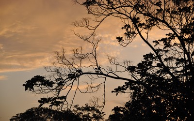 Tree branches at sunset wallpaper