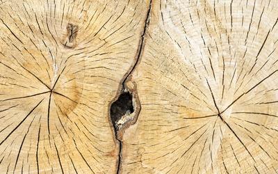 Tree rings wallpaper