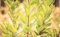 Tree sprouts wallpaper 2560x1600 jpg