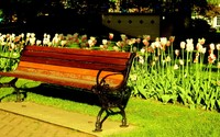 Tulips behind the bench wallpaper 1920x1080 jpg