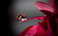 Water drop on a flower wallpaper 2560x1600 jpg