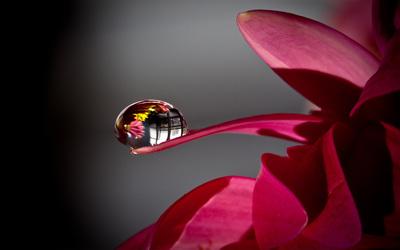Water drop on a flower Wallpaper