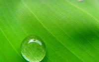 Water drop on a leaf wallpaper 1920x1080 jpg