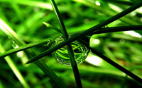 Water drop on grass wallpaper 1920x1080 jpg